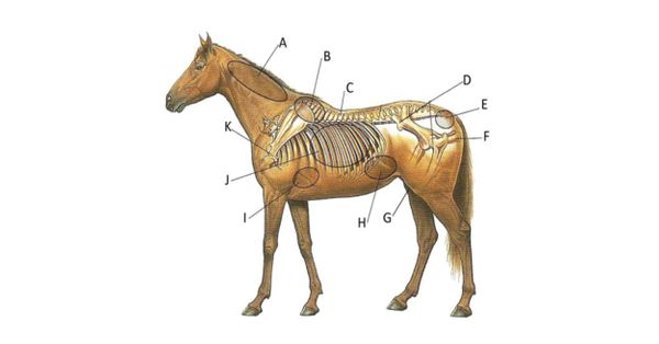 Body Condition Scoring Your Horse