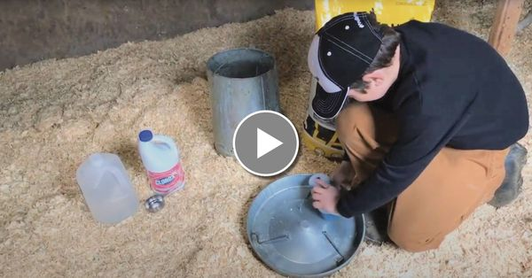 Cleaning Chicken Feeders